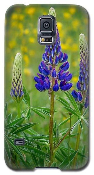 Purple Lupines Galaxy S5 Case