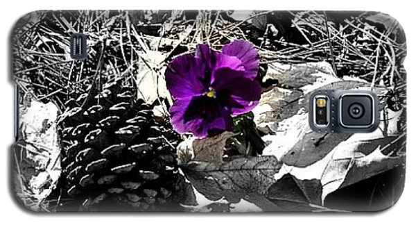 Galaxy S5 Case featuring the photograph Purple Pansy by Tara Potts