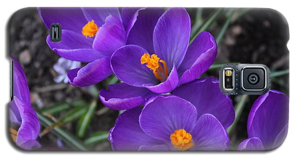 Galaxy S5 Case featuring the photograph Purple Passion by Judy Palkimas