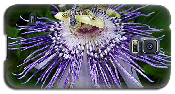 Galaxy S5 Case featuring the photograph Purple Passionflower by William Tanneberger