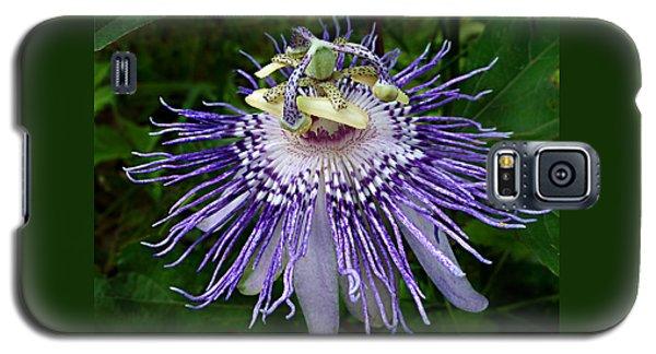 Purple Passionflower Galaxy S5 Case