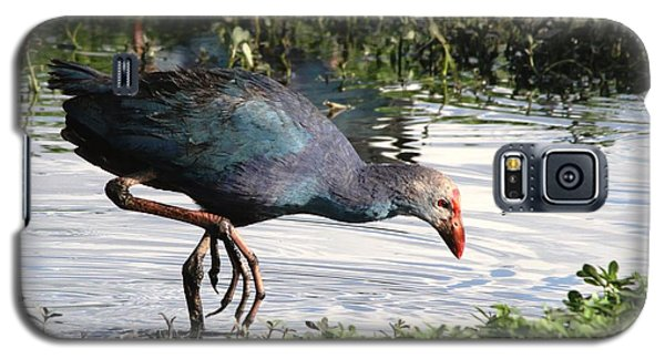 Galaxy S5 Case featuring the photograph Purple Swamphen by Ramabhadran Thirupattur