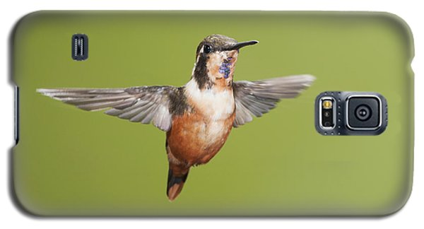 Purple-throated Woodstar Hummingbird Galaxy S5 Case
