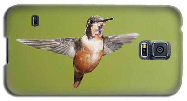 Purple-throated Woodstar Hummingbird Galaxy S5 Case