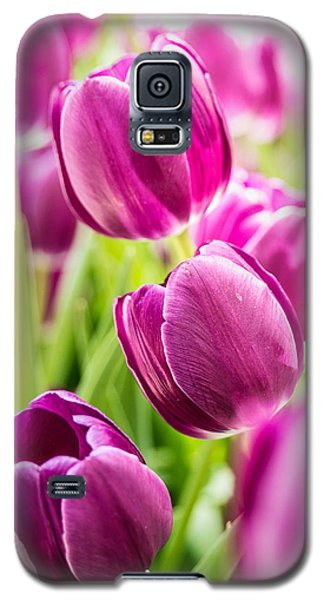 Purple Tulip Garden Galaxy S5 Case