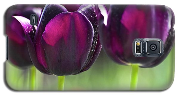 Purple Tulips Galaxy S5 Case