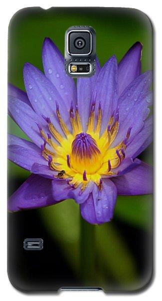 Purple Water Lily Galaxy S5 Case by Pamela Walton