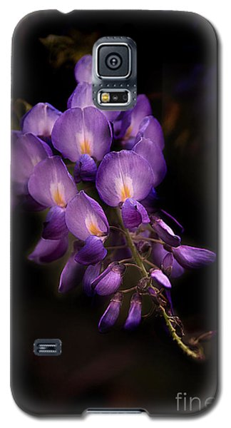 Purple Wisteria Galaxy S5 Case