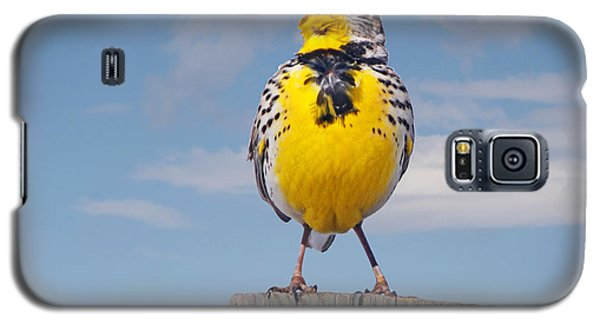 Galaxy S5 Case featuring the photograph Putting On The Ritz Meadowlark by Stephen  Johnson