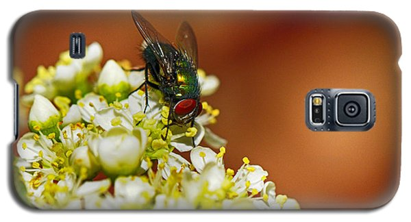 Pyracantha And Fly Galaxy S5 Case by Karen Slagle
