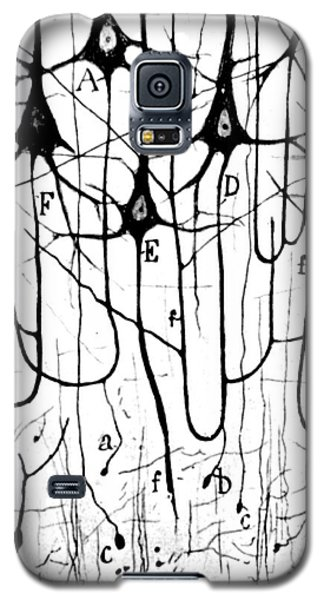 Pyramidal Cells Illustrated By Cajal Galaxy S5 Case