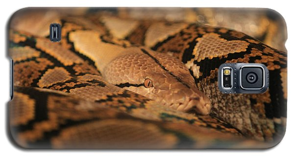 Python Galaxy S5 Case