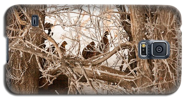 Galaxy S5 Case featuring the photograph Quail In Camo by Shirley Heier