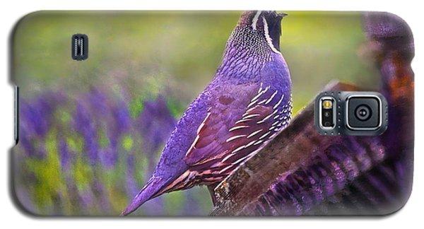Quail In Lavender Galaxy S5 Case by Kari Nanstad