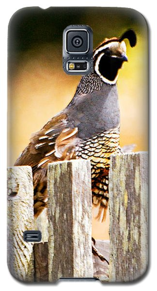 Quail Lookout Galaxy S5 Case