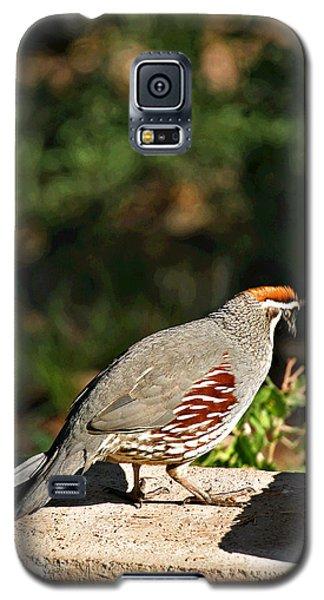 Quail Galaxy S5 Case