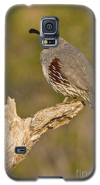 Galaxy S5 Case featuring the photograph Quail On A Stick by Bryan Keil