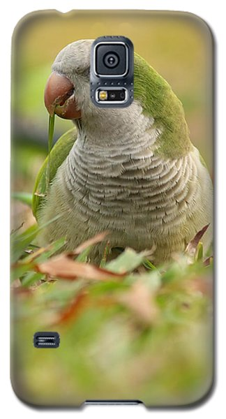 Quaker Parrot #3 Galaxy S5 Case