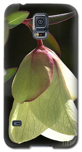 Qualup Bell Flower  Galaxy S5 Case