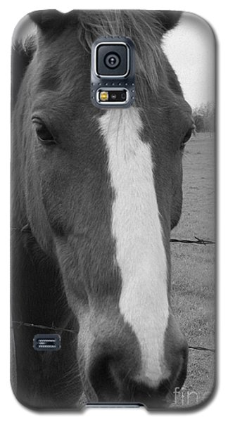 Quarter Horse Galaxy S5 Case