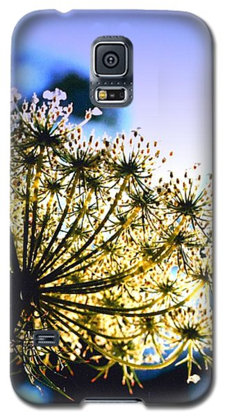 Galaxy S5 Case featuring the photograph Queen Anne's Lace II by Diane Merkle