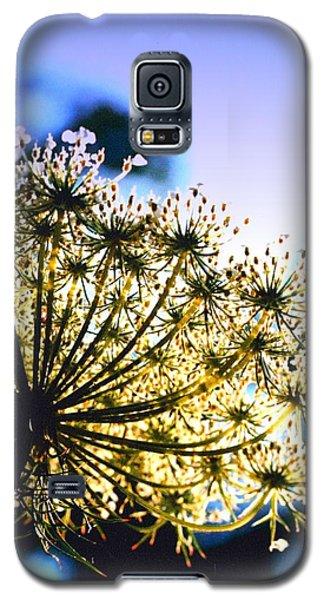 Queen Anne's Lace II Galaxy S5 Case