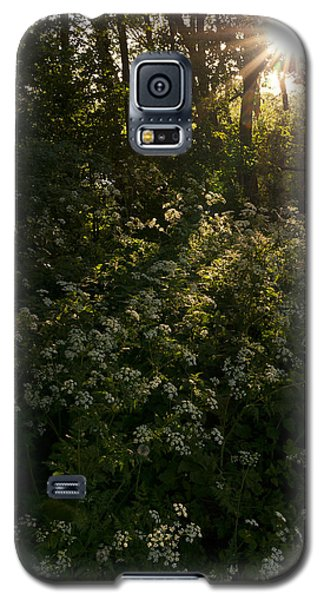 Galaxy S5 Case featuring the photograph Queen Anne's Lace On The Woodland Floor by David Isaacson