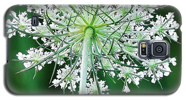 Queen Ann's Lace Galaxy S5 Case