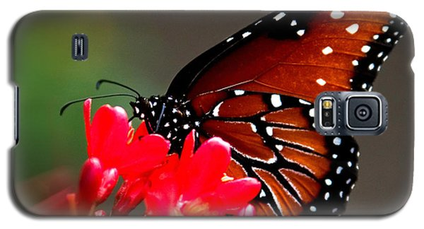 Queen Butterfly II Galaxy S5 Case