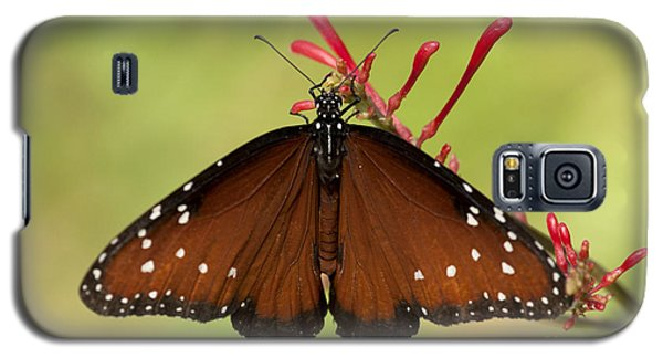 Queen Butterfly Galaxy S5 Case