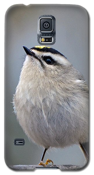 Queen Of The Kinglets Galaxy S5 Case by Stephen Flint