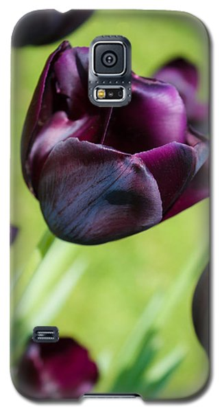 Galaxy S5 Case featuring the photograph Queen Of The Night Black Tulips by Peta Thames