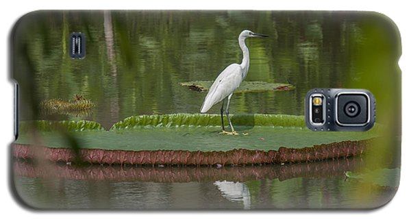 Queen Victoria Water Lily Pad With Little Egret Dthb1618 Galaxy S5 Case