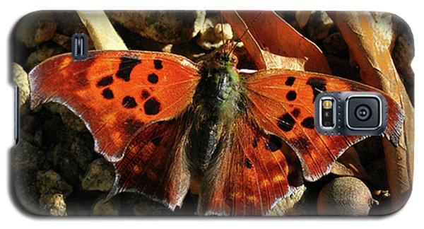 Galaxy S5 Case featuring the photograph Question Mark Butterfly by Donna Brown