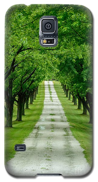 Quiet Path Between Trees Galaxy S5 Case