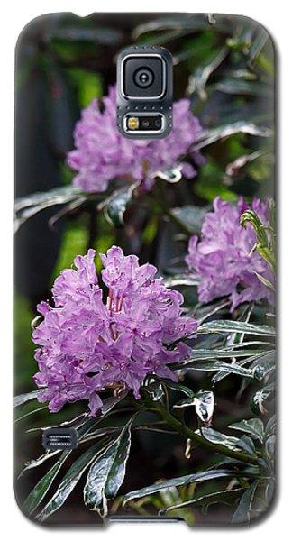 R. Ponticum Variegatum Galaxy S5 Case by Chris Anderson