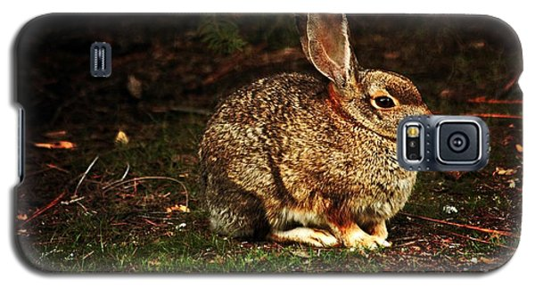 Galaxy S5 Case featuring the photograph Rabbit  by Marjorie Imbeau