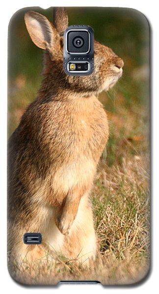 Rabbit Standing In The Sun Galaxy S5 Case