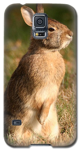 Rabbit Standing In The Sun Galaxy S5 Case