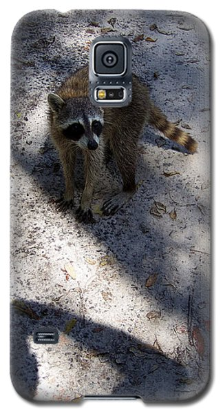 Galaxy S5 Case featuring the photograph Raccoon 0311 by Chris Mercer