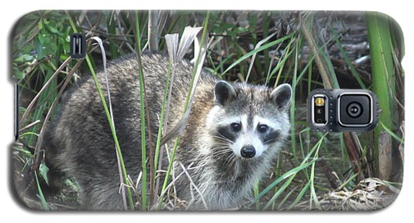 Raccoon Galaxy S5 Case