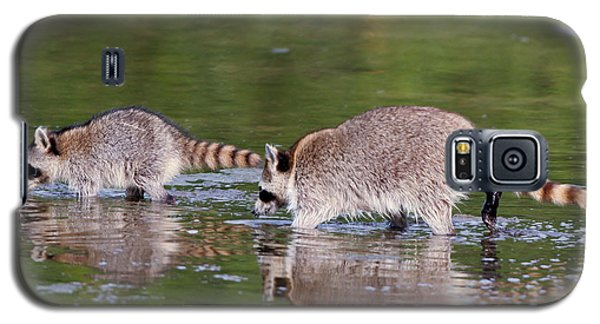 Raccoon Mother And Baby Galaxy S5 Case