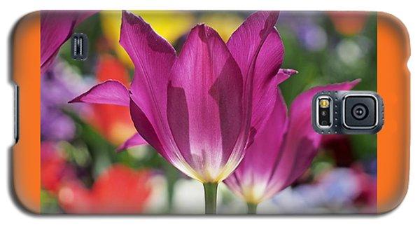 Radiant Purple Tulips Galaxy S5 Case