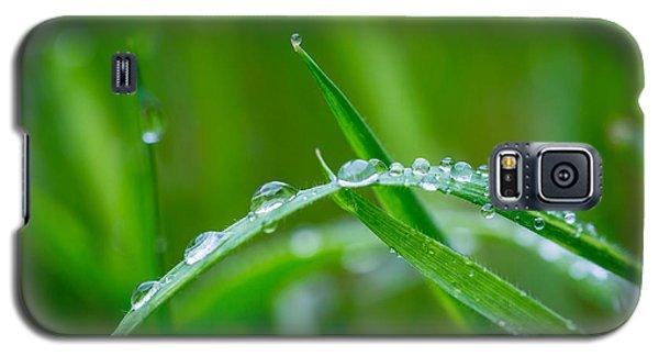 Rain Covered Grass Galaxy S5 Case