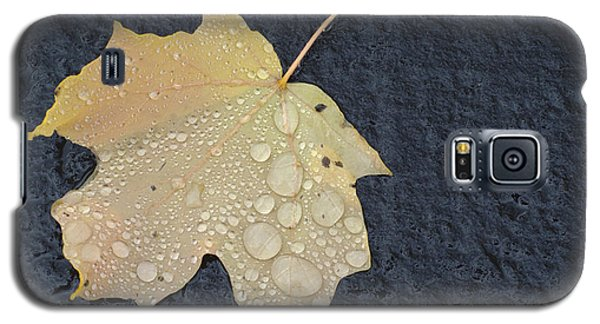 Rain Drops On A Yellow Maple Leaf Galaxy S5 Case