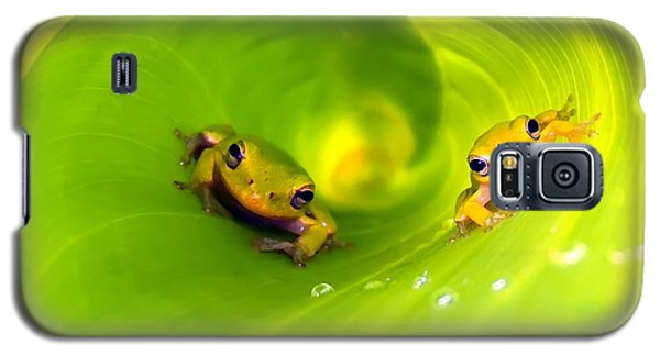 Rain Frogs Peeking Out Galaxy S5 Case