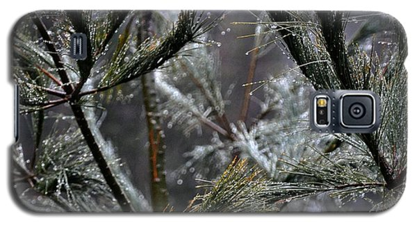 Rain On Pine Needles Galaxy S5 Case