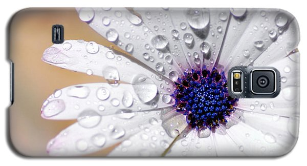 Rain Soaked Daisy Galaxy S5 Case by Kaye Menner