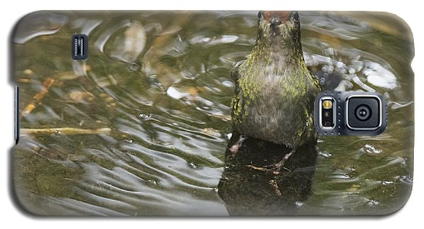 Galaxy S5 Case featuring the photograph Rainbow-bearded Thornbill Hummingbird by Dan Suzio
