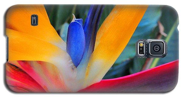 Rainbow Bright Galaxy S5 Case by Kristine Merc
